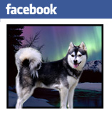 Klee Kai Facebook Badge